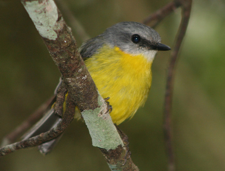 Cyprus Needs to Stop Songbird Slaughter, Demands Petition