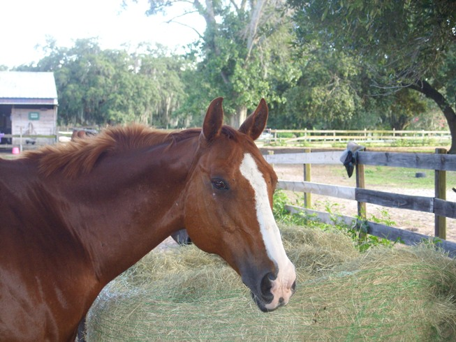 Ban Horse Slaughter in US: PCRP Calls for Support for SAFE Act