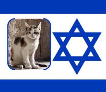 Israel to Neuter 45 Thousand Stray Cats
