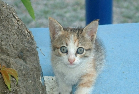 Greek Authorities Pressing to Close Cat Sanctuary