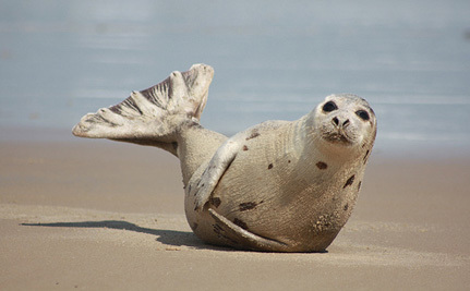 WTO Upholds EU's Seal Product Ban