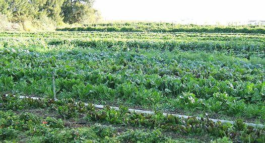 Eco-Friendly Farming Practices