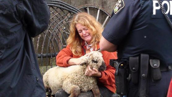 Montana Jones's Rare Sheep and Dictatorial Agenda of Canadian Government