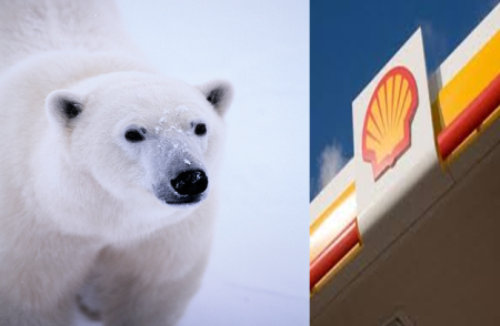 Activists Celebrate as Shell Announces No Drilling in Arctic in 2014