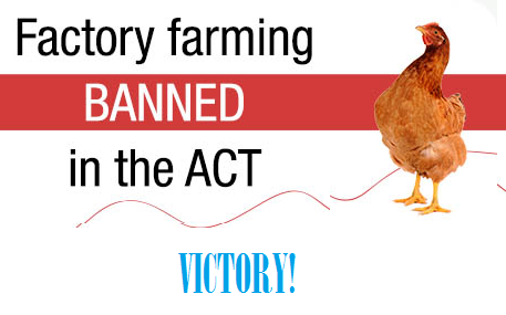 Factory Farming Banned by Law in ACT, Australia