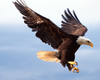 A Call for Protecting America's Eagles from Wind Industry
