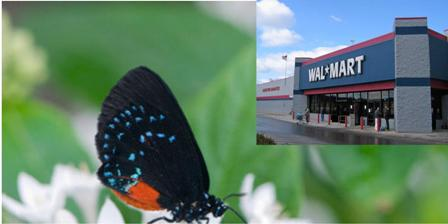 Will You Have Walmart or a Forest?