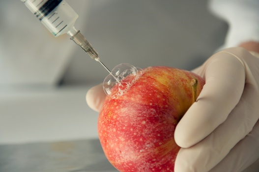 Growth and Sale of GMO Apples Approved by USDA
