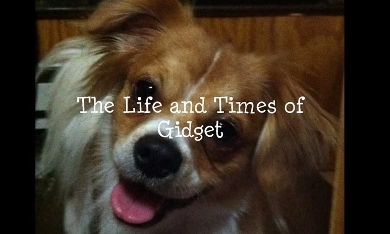 The Life and Times of Gidget