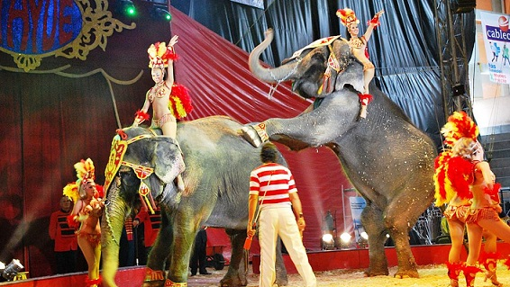 Italy Bans Use of Animals in Circus