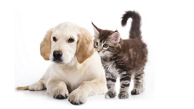 PA: Vaccine Gestapo to Visit Houses for Checking Pet Vaccination Status