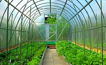 5 Tips for Choosing a Greenhouse