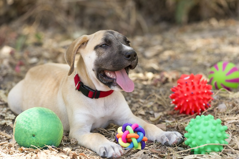 5 Ways Interactive Dog Toys Can Benefit Your Dog