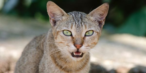Australia's Ecological Jihad against Feral Cats