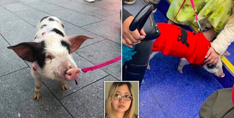 Vegan Animal Rights Activist Banned from Seeing Her Rescued Piglet