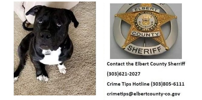 One Year Later, No Break in Case of Murdered Colorado Dog