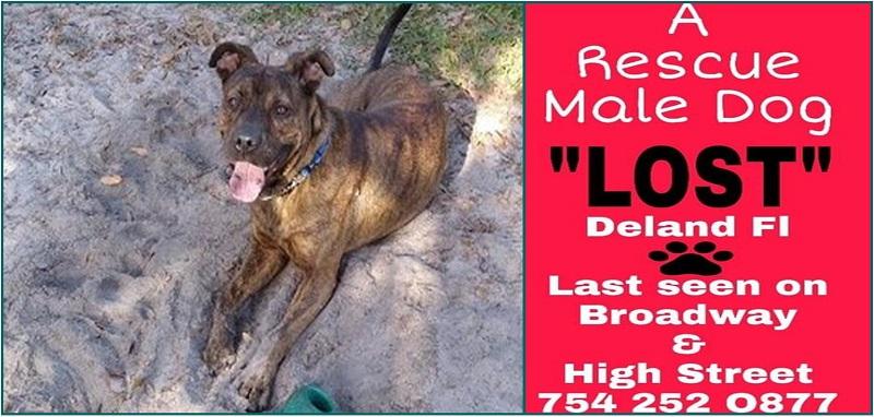 Buddy Goes Missing in Deland, FL