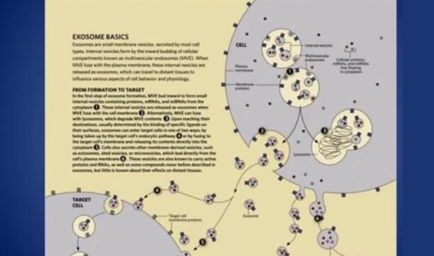 Coronavirus or Radiation-Triggered Exosomes? Doctor Explains