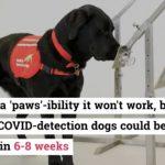 covid-dogs