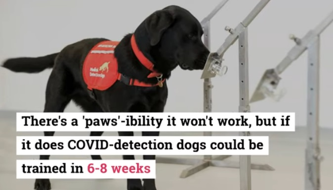 British Researchers to Train Dogs for Detecting COVID 19