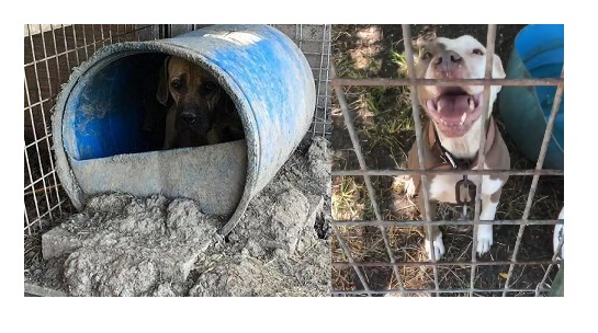 Texas Sheriff Refuses to Intervene in Ongoing Animal Abuse Case in Delta County