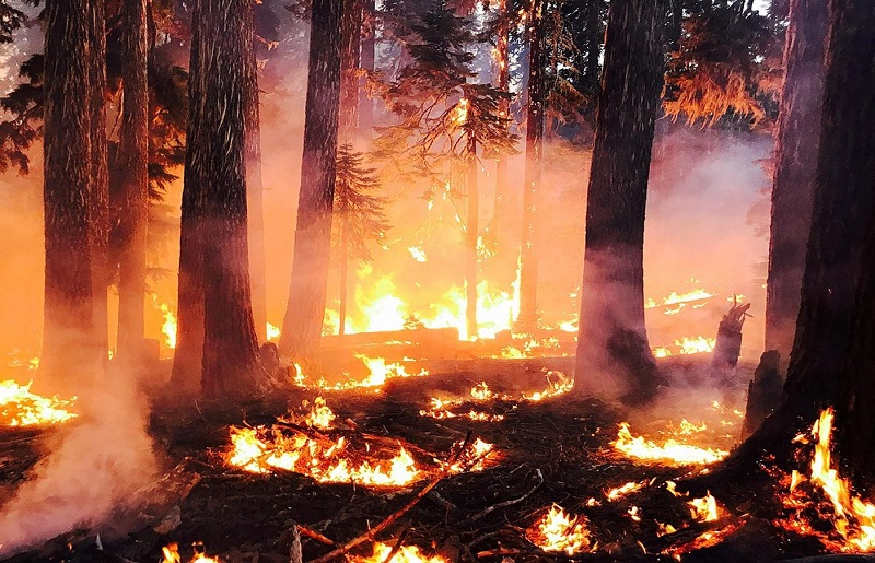 West Coast Fires the Result of Criminals Not Climate