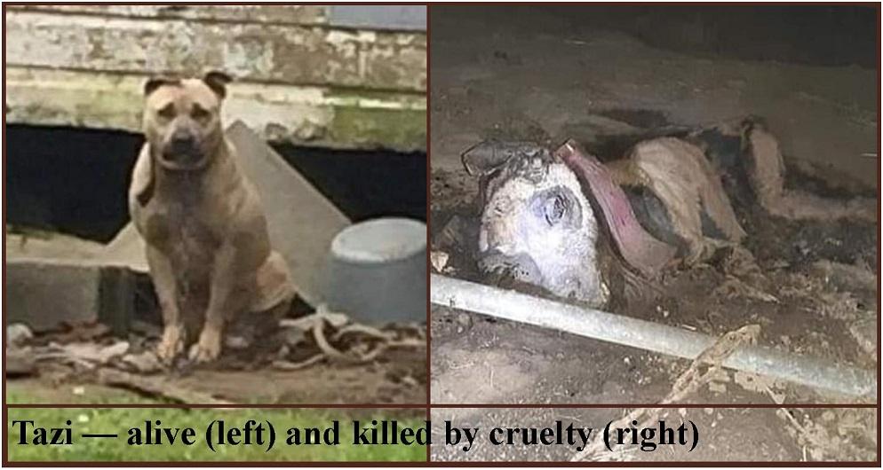 No Arrest in Case of Tazi – Dog Starved to Death in Mobile, AL