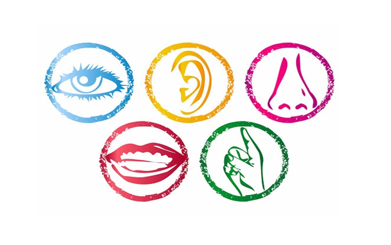 Educational Resources for Multisensory Learning for Teachers & Students