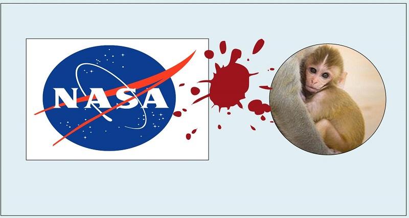 27 Monkeys Murdered by NASA in a Single Day