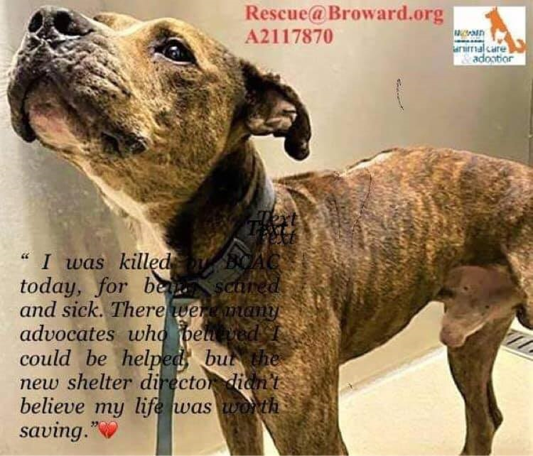 Broward County Shelter Killed Stray Dog Because He Was Fearful