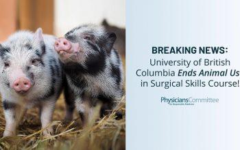 UBC animal testing
